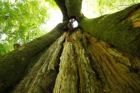 dutinovy-strom